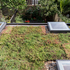 Extension Sedum Roof